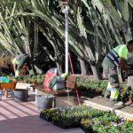 El Ayuntamiento intensifica la plantación de otoño-invierno con 250.000 ejemplares de color y arbustivos