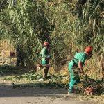 Se desbrozan más de 80 kilómetros en una docena de caminos rurales para evitar inundaciones