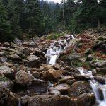 Los ayuntamientos de Casares, Genalguacil, Jubrique y Estepona piden que el futuro parque nacional incluya también en su denominación el nombre de Sierra Bermeja