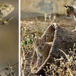 La popularidad de las especies provoca errores estratégicos en las políticas de conservación