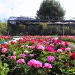 Estepona Jardín de la Costa del Sol contará con  20.000 macetas en el Centro