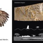 Dos fósiles españoles ayudan a esclarecer cómo evolucionó el vuelo en las primeras aves