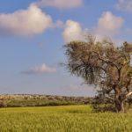 El sector agrario es la única actividad productiva en la que crece el desempleo