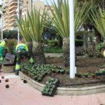 Estepona contará esta primavera con  250.000 ejemplares de color y arbustivas