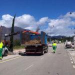 El Ayuntamiento realiza una plantación de más de 30 árboles en la avenida de acceso al Auditorio Felipe VI