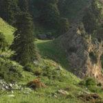 Ayuntamientos, Ecologistas en Acción y asociaciones presentan alegaciones al Parque Nacional Sierra de las Nieves