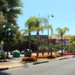 Estepona refuerza la jardinería de las principales avenidas de la ciudad